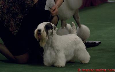 Charmin - Westminster Dog Show