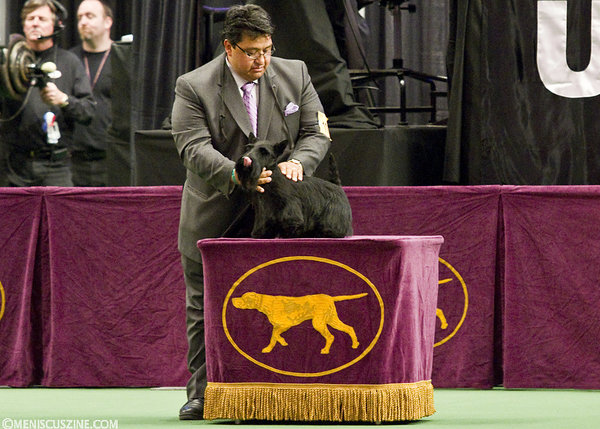 Gabriel Rangel guided Sadie, a Scottish Terrier, to the Best in Show title in 2011. (photo by Kwai Chan / Meniscus Magazine)