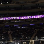 137th Westminster Kennel Club Dog Show