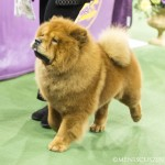 WKC_NonSporting_ChowChow