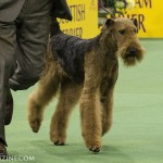 WKC_Terrier_Airedale