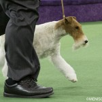 WKC_Terrier_Fox (wire)