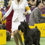 WKC_Working_Giant Schnauzer