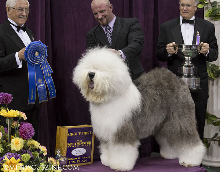 Crowd favorite Swagger, an Old English sheepdog, won the Herding Group at the 2013 Westminster Dog Show. (photo by Kwai Chan / Meniscus Magazine)