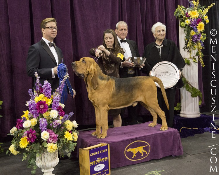 1st Place: GCH Flessner's International S'Cess Breed: Bloodhound (photo by Kwai Chan / Meniscus Magazine)