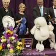 The Non-Sporting group podium featured a mix of 2013 veterans and new faces. A standard poodle moved up from a runner-up finish last year to win the title.