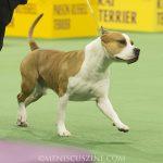 WKC_BestinGroup_Terrier_04