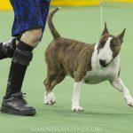 WKC_BestinGroup_Terrier_09