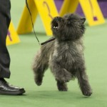 WKC_BestinGroup_Terrier_12