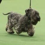 WKC_BestinGroup_Terrier_13