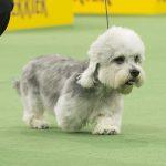 WKC_BestinGroup_Terrier_14