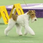 WKC_BestinGroup_Terrier_17