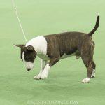 WKC_BestinGroup_Terrier_21