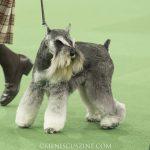WKC_BestinGroup_Terrier_23