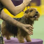 WKC_BestinGroup_Terrier_24