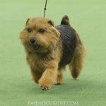 WKC_BestinGroup_Terrier_25