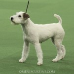 WKC_BestinGroup_Terrier_27