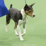 WKC_BestinGroup_Terrier_28