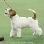 WKC_BestinGroup_Terrier_29