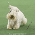 WKC_BestinGroup_Terrier_31