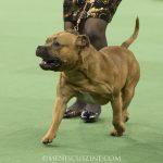 WKC_BestinGroup_Terrier_33