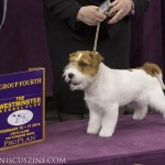 WKC_BestinGroup_Terrier_37