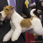 WKC_BestinGroup_Terrier_40