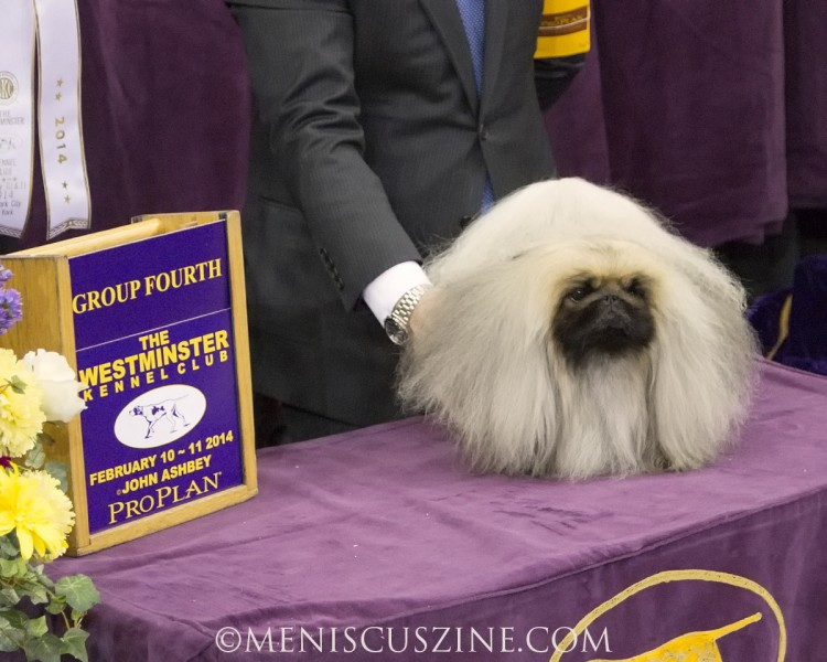 Ch Yakee Easily Persuaded Breed: Pekingese (photo by Kwai Chan / Meniscus Magazine)