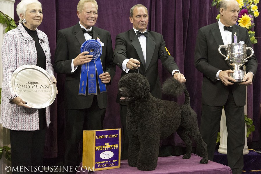 First place: GCH Claircreek Impression De Matisse Breed: Portuguese Water Dog (photo by Kwai Chan / Meniscus Magazine)