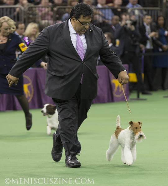 Sky competing with her handler, Gabriel Rangel, during the Best in Show competition. (photo by Kwai Chan / Meniscus Magazine)