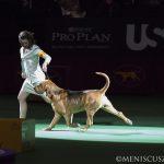 WKC2014_BestinHoundGroup_Bloodhound_Flessner'sInternationalS'Cess_01