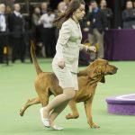 WKC2014_BestinHoundGroup_Bloodhound_Flessner'sInternationalS'Cess_04