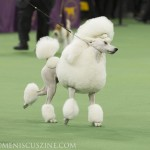 WKC2014_BestinNonSportingGroup_StandardPoodle_BrightonLakeridgeEncore_01