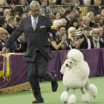 WKC2014_BestinNonSportingGroup_StandardPoodle_BrightonLakeridgeEncore_02