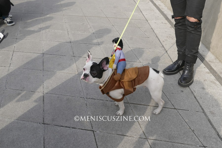 This dog captured more attention than its owner at Seoul Fashion Week. (photo by Yuan-Kwan Chan / Meniscus Magazine)