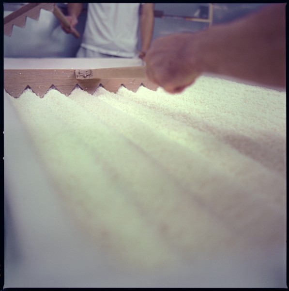 Koji, the main ingredient required for saké. (photo courtesy of Erik Shirai)