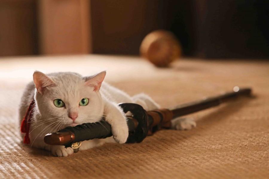 "I can haz sword? The ""neko"" in ""Neko Samurai."" (still courtesy of the Japan Society)"