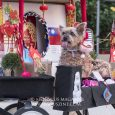 Images from the Chinatown Cultural Plaza, the Tsung Tsin Association and the Tin Hau Temple included a dog fashion show and lion dances.